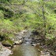 10熊野古道の渓流
