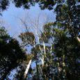 18内宮の樹木