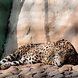 15ラ・ベンダ遺跡公園 ジャガー