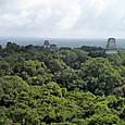33ティカル遺跡 4号神殿からの眺め