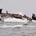 09リーフ島のアシカの群れ