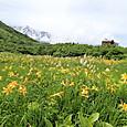 20ニッコウキスゲのお花畑