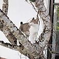 04美人のネコさん