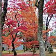 08仁和寺 金堂横の紅葉