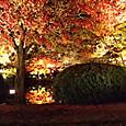 16東寺 池に映る紅葉