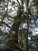 伊雑宮の森