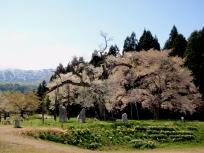 釜越の桜と朝日連峰