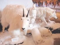 白い動物たち