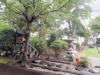 雨降りのお庭