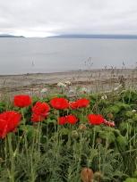 海辺の赤い花