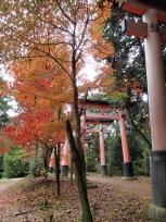 京都一周トレイル