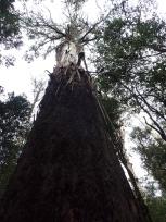 皮がむけた木
