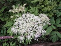 ナゾの白いお花