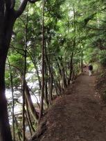 湖畔の遊歩道
