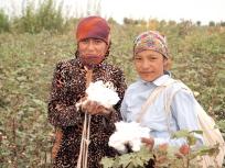 綿花摘みの少女たち