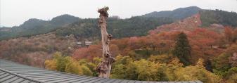 喜蔵院からの眺め