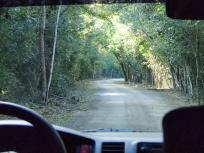 自然保護区内の道