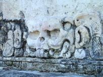 兎の頭蓋骨