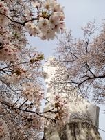 桜と観音像