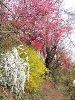 花見山公園