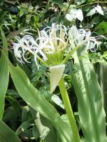 バードウォッチングエリアのお花