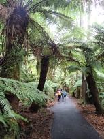 苔むす森と遊歩道