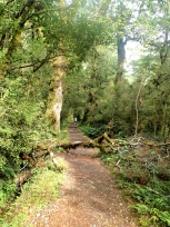 森を抜ける道