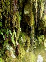 水のしたたる苔