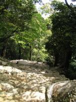 神倉神社の石段(上から)